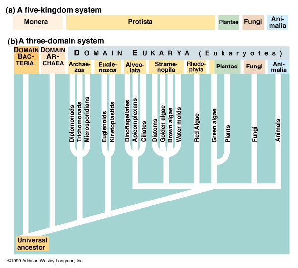 three domain system of classification In his book generelle morphologie der organismen suggested a three-kingdom system system of classification did three-domain classification has.