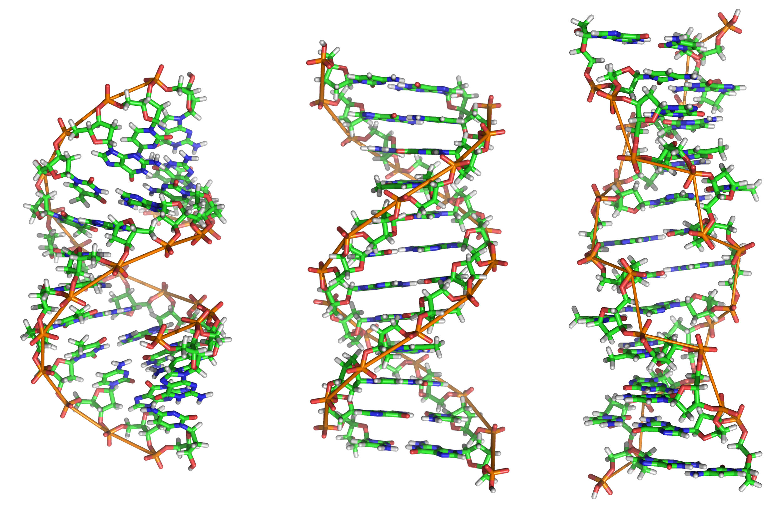 Dna a b and z forms of dna falaconquin