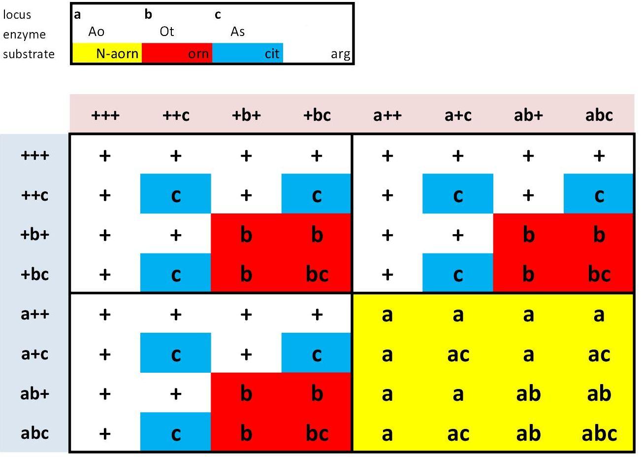 Arginine Synthesis In Diploids