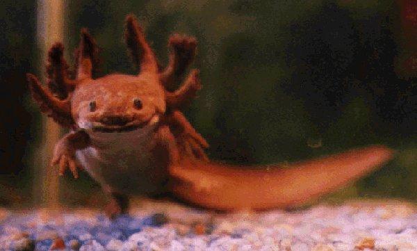 Axolotl_EarthyGreetBig.jpg