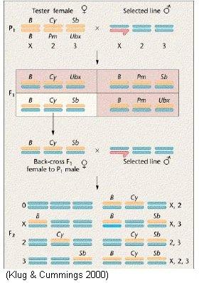 Experimental evolution, behavior and genetics: Associative ...