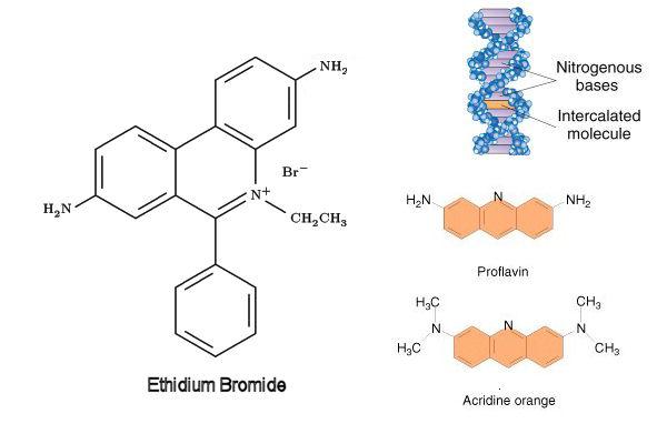 Mutagen Biology | www.pixshark.com - 27.8KB