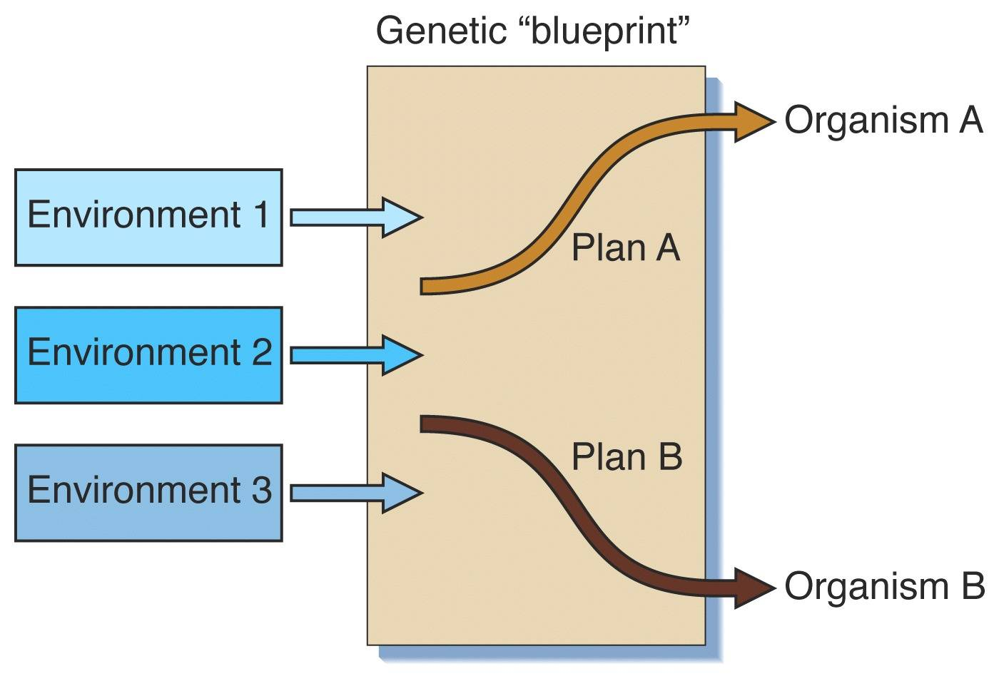 Genetic environmental interaction three models of genetic x environmental interactions malvernweather Choice Image