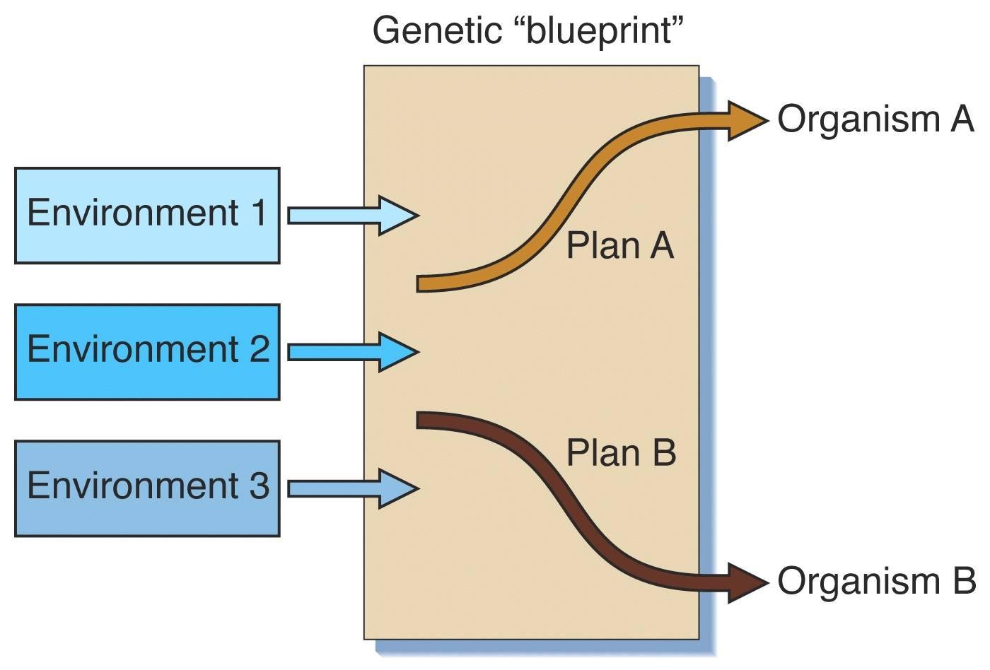 Examples of environmental determinism