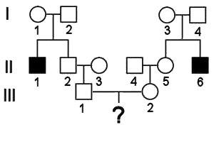 solving pedigree problems