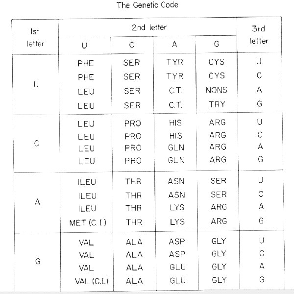 how to read a genetic code table