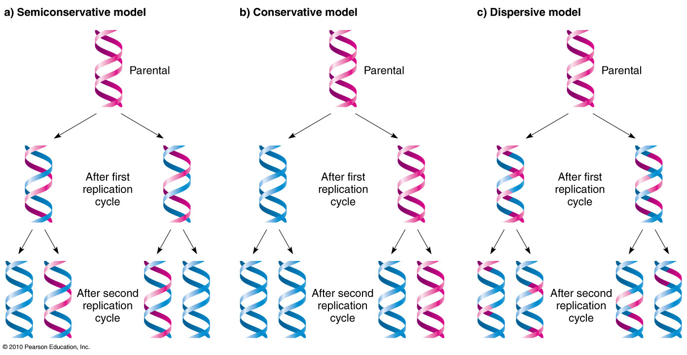 modes of dna replication