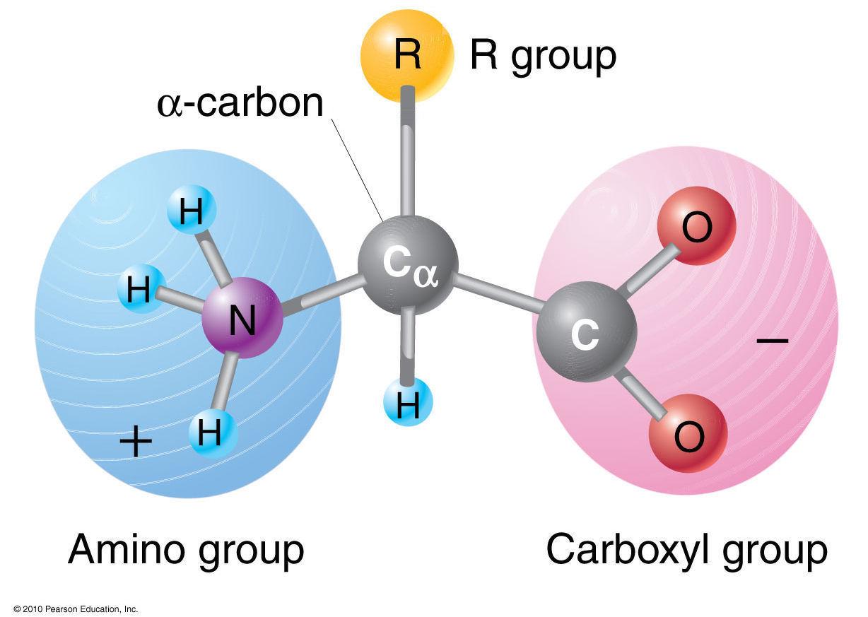 Amino Acid Image amino acid structure