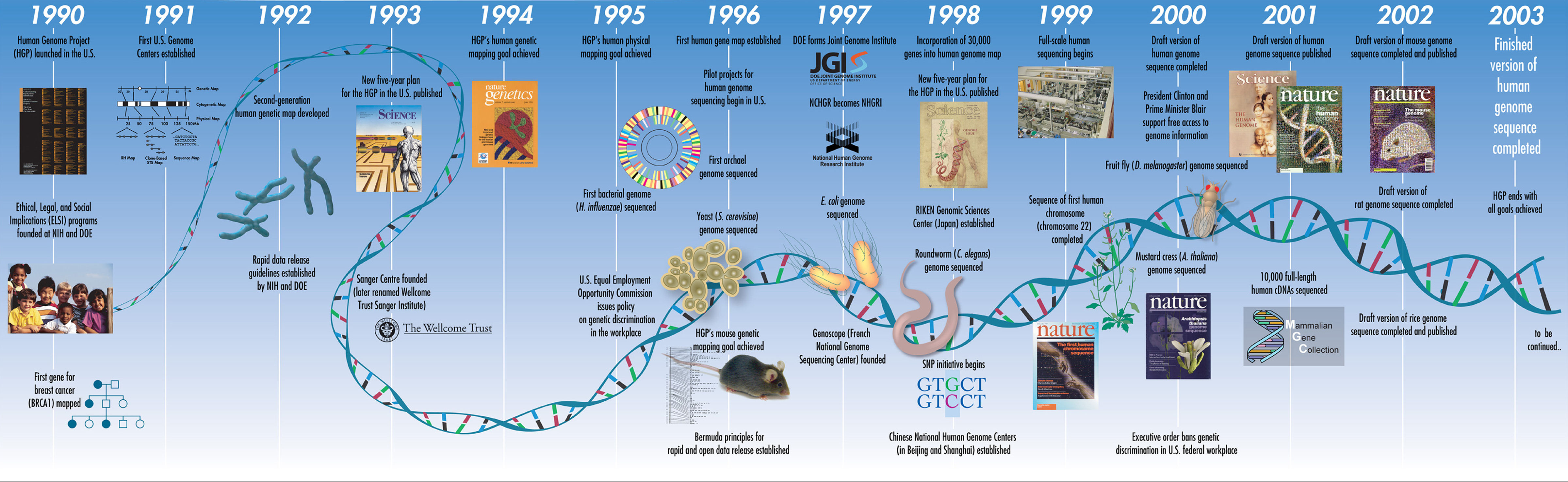 a history of the discovery of genetic engineering With the discovery of recombinant dna by cohen and boyer in 1973, the idea that genetic engineering would have major human and societal consequences was born in july 1974, a group of eminent molecular biologists headed by paul berg wrote to science suggesting that the consequences of this work were so potentially destructive that there should.