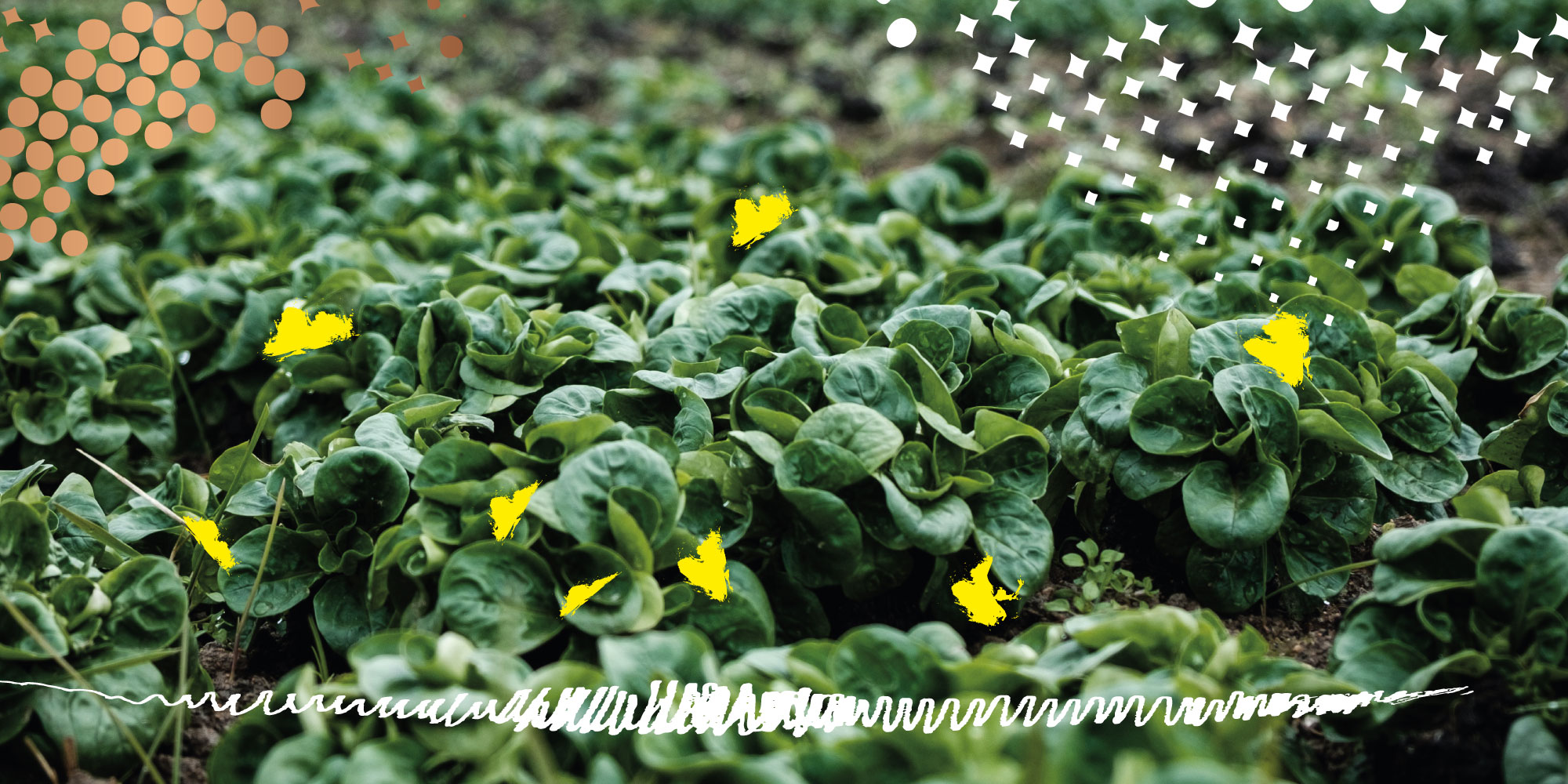 Green leafy looking vegetables like spinach with illustrative halftone and butterflies overlay